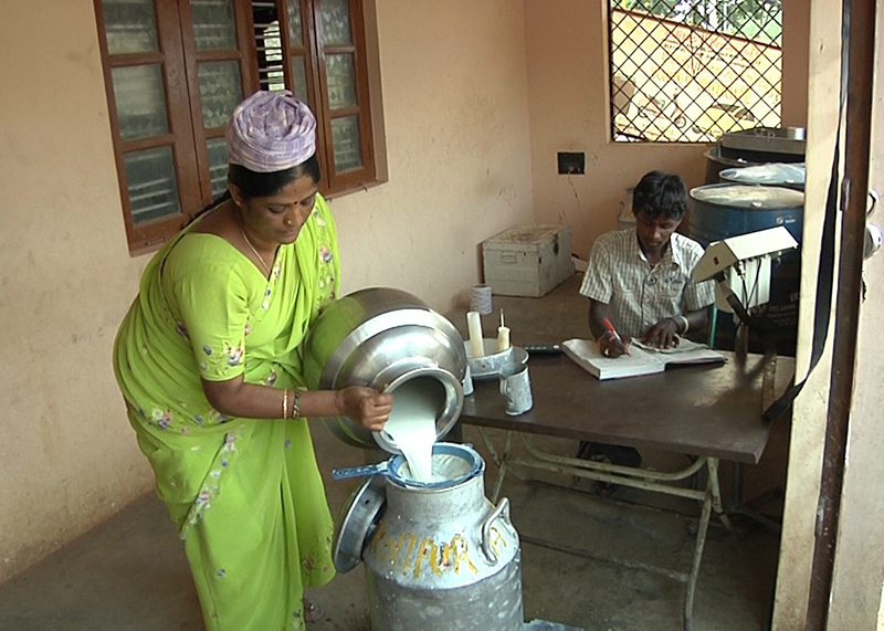 strengthening organic dairy farming